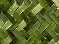 Tribal Images - Maori weaving flax harakeke raranga art, Northland